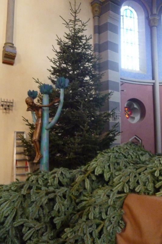 wie kommen die weihnachtsb ume in die kirche. Black Bedroom Furniture Sets. Home Design Ideas